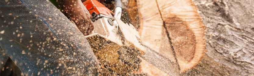 Chainsaw-Sharpener-Buying-Guide