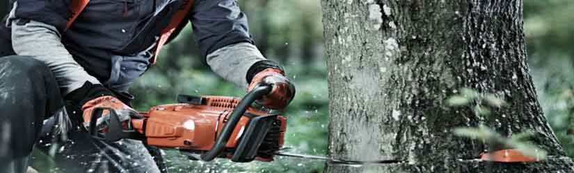 best-chainsaws